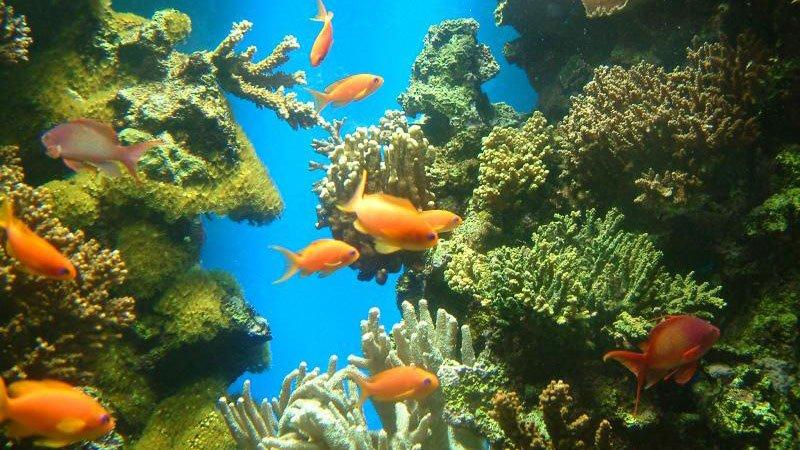 coral-hurghada-egypt.jpg