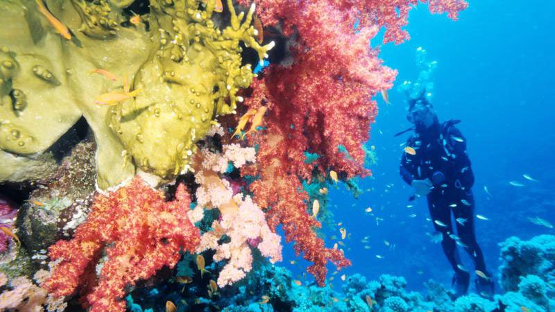 coral-red-sea-egypt.jpg