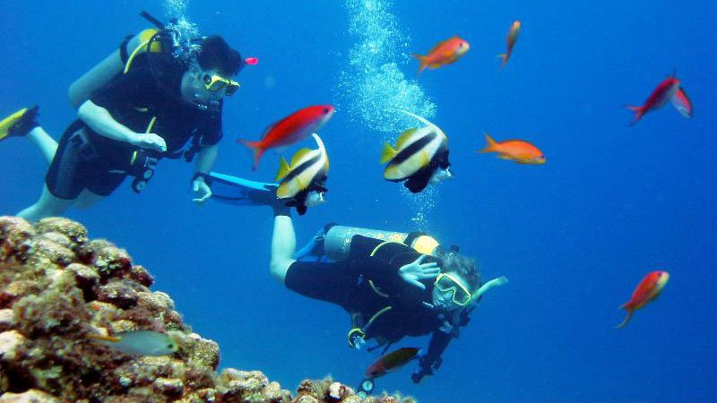 diving-red-sea-egypt.jpg