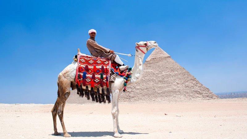 egypt-camel-pyramids.jpg