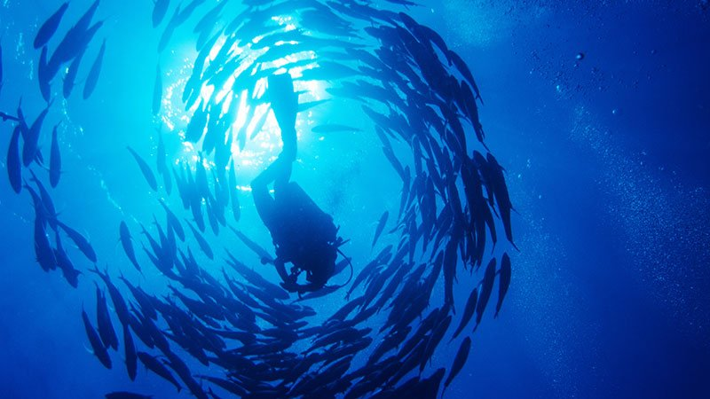jack-fish-hurghada-egypt.jpg