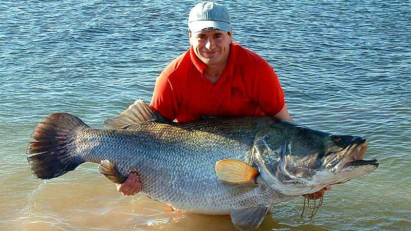 Nile Perch to unbelievable sizes, Lake Nasser, Egypt