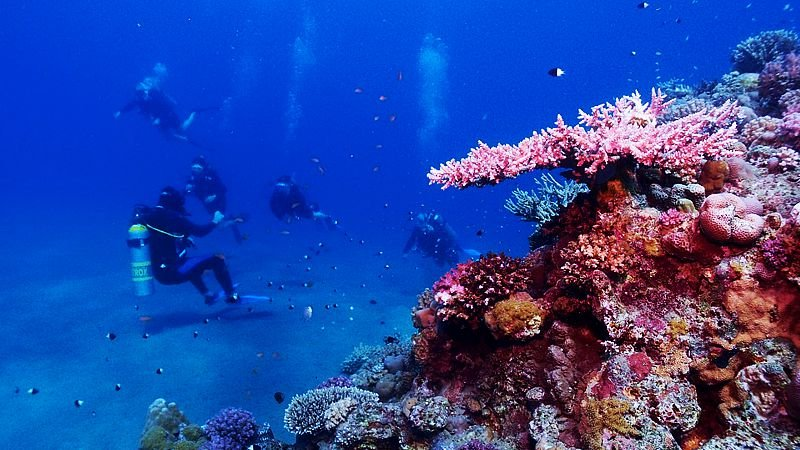 red-sea-underwater-egypt.jpg
