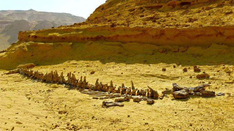 valley-whales-wadi-hittan-egypt.jpg