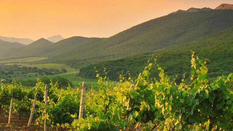 vineyards-at-sunset-lebanon.jpg